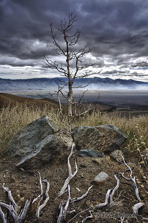 Eastern Sierra's © Oliver Tollison