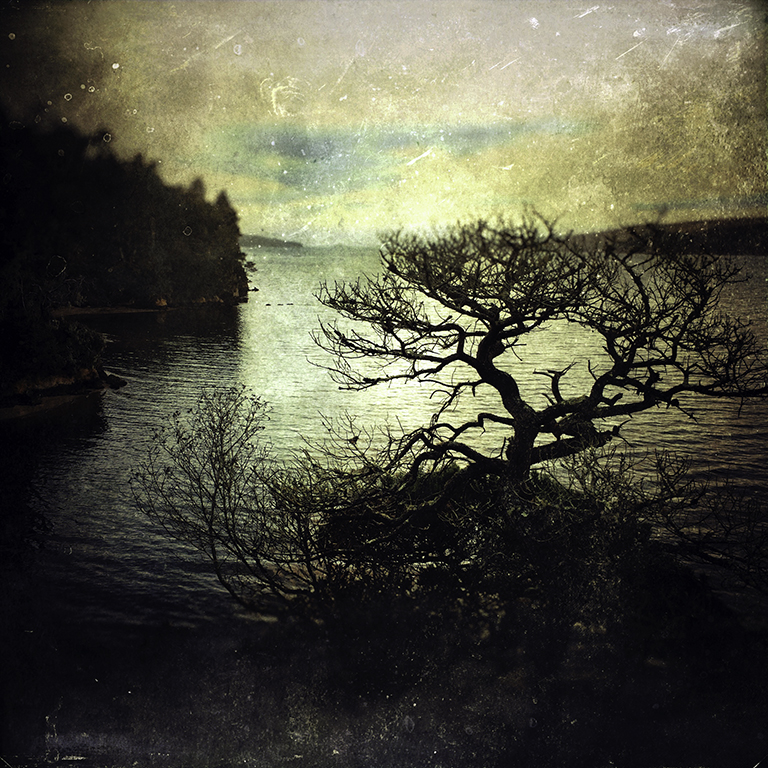 image of tree at Tomales Bay, California