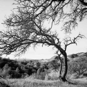 tree photography by Oliver Tollison