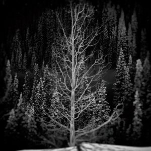 black and white image of tree in snow